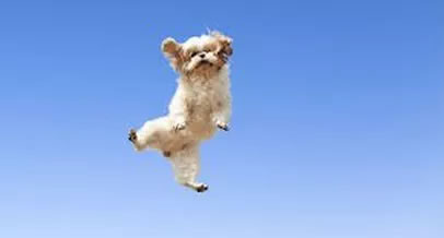 Picture of dog flying in the air
